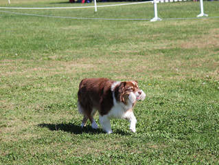VHOC Agility Trial Results & Pictures