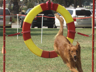 New Agility Unleashed Class