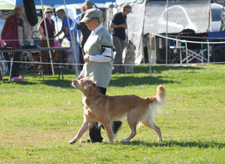 The VHOC Obedience and Rally Trials have been canceled this year. See you September 18 & 19th, 2