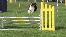 VHOC Agility Trial Pictures