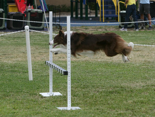 VHOC's Annual Obedience and Rally Trial