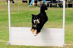 Tonka Top Dog 2006