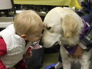 Lutheran Church Charities' K-9 Comfort Dog Ministry