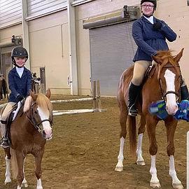 Equtation Horse For Sale Colorado