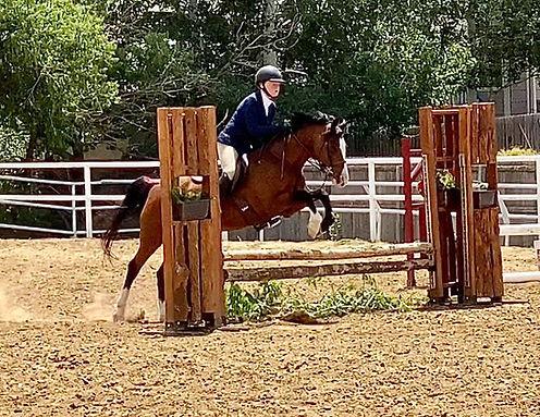Kids Hunter Jumper Horse for Sale