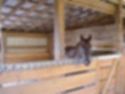Full Care Horse Boarding