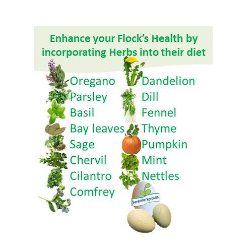 Fresh Dried Herbs: Improve Health & Egg Production