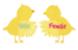 wing sexing chicks.jpg