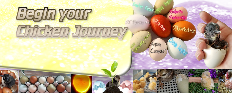 Hatching Egg background2_edited.png