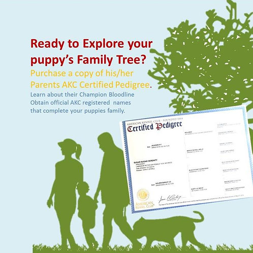 AKC Pedigree /Registration / Insurance