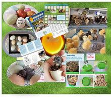 complete hatching kit.jpg