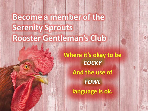 Gentleman's Club - Pet Rooster Intake