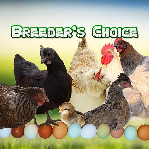 Breeder's Choice - When Age Matters more than Breed