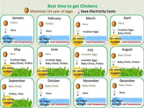 When to get chickens.jpg