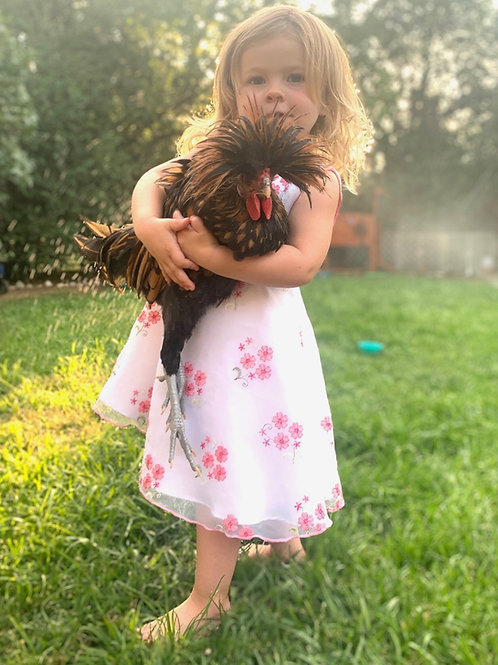 Adopt a Rooster by Breed - Next Available