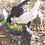 Thumbnail: Polish - Feather Color Surprise