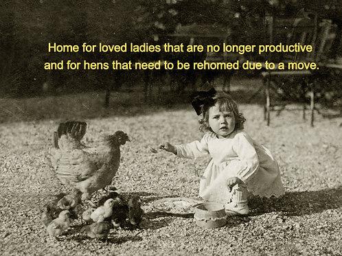 Hen Retirement Home - Pet Hen Intake