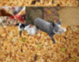 FEED PHOTO2.jpg