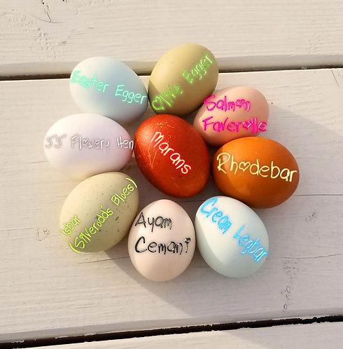 Named Eggs1.jpg