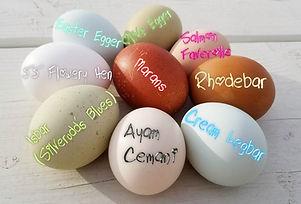 Named Eggs2.jpg