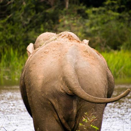 Experiencing the wild @ Yala National Park, Sri Lanka