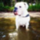 Blaze Dorset Olde Thyme Bulldogge.jpg