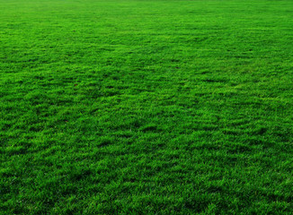 THIS WEEKEND - 10 Steps to a Greener Lawn