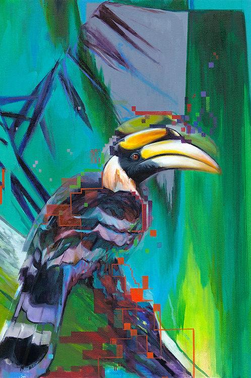 Hornbill II