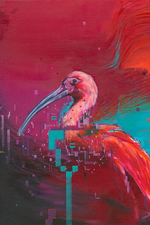 Ibis I