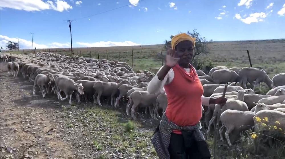 Sheep, Sheep herder, gravel road, Xhosa woman