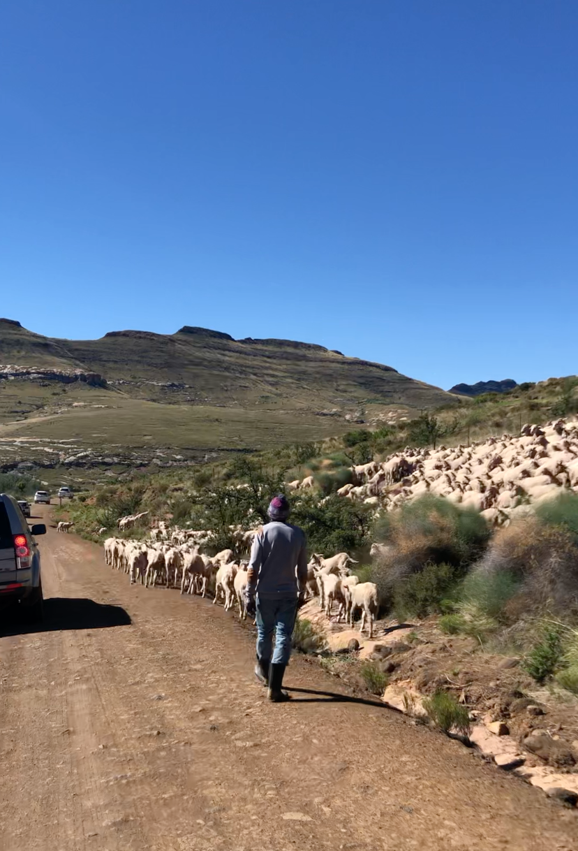Rhodes, Barkley East, Sheep herder, mountain, 4x4 travel, off-road travel