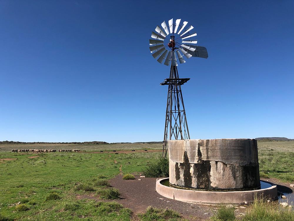 adventure motorcycle, 4x4 tour, motorcycle tour, Karoo tour, Karoo tourism, adventure bike tour, windpump wind pump, wind mill, sheep, karoo lamb,