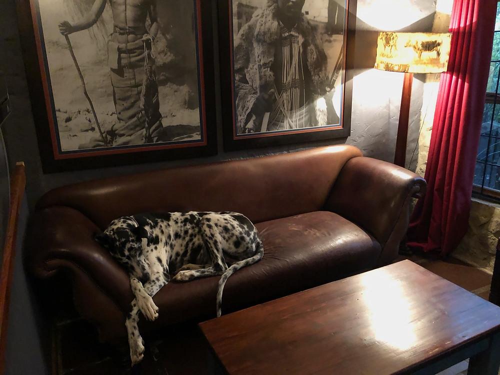 Great Dane, The Edge Restaurant, Craft Beer,  Beer on tap, Rustic, Eclectic