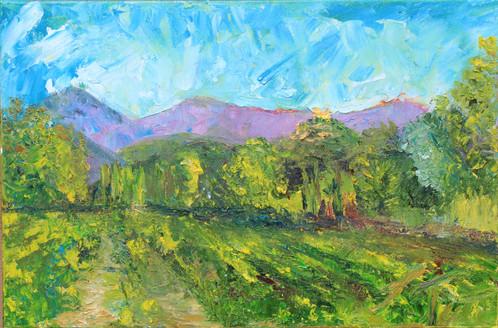 Provence Vineyard in Grimaud