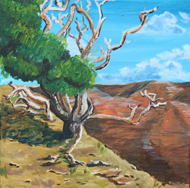 WAIMEA CANYON KOA TREE