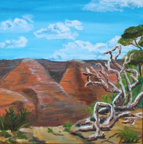 WAIMEA CANYON KOA TREE FALLEN