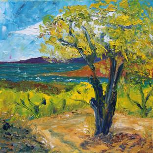 Provence Hill Trail (One Cork Oak)