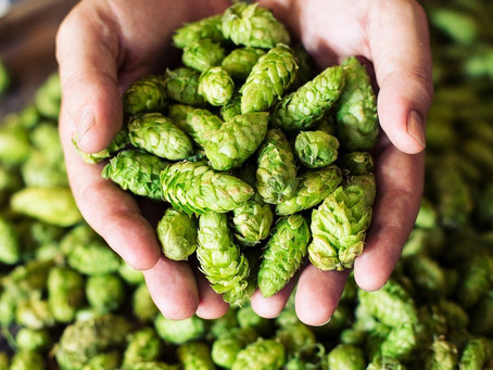 Help us support the local hops plantation!