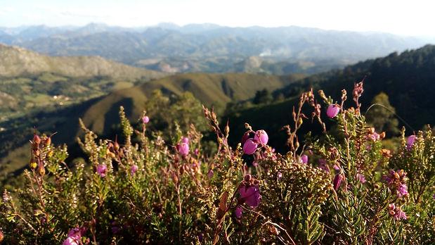 flores asturias.jpg