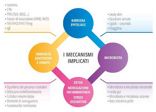 meccanismi.png