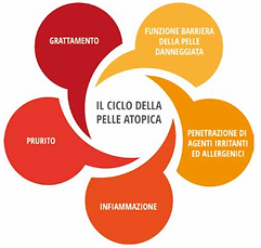 il ciclo.png
