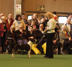 Crufts Remus Roulette
