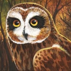 Autumn Short Eared Owl.jpg