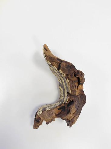 serpens 9'.jpg