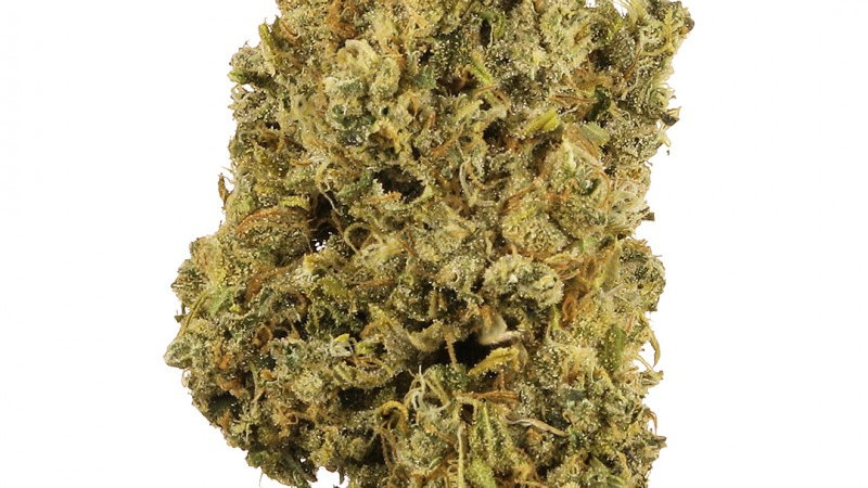 Fleur d'infusion Durban Poison GreenHouse <0.2% /1Kg