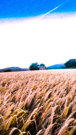 french field.jpg