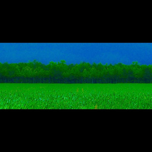 LAND #landlegs #straightroad #onc #blueandgreen #wallartprint #contemporaryart #abstractart #farmart