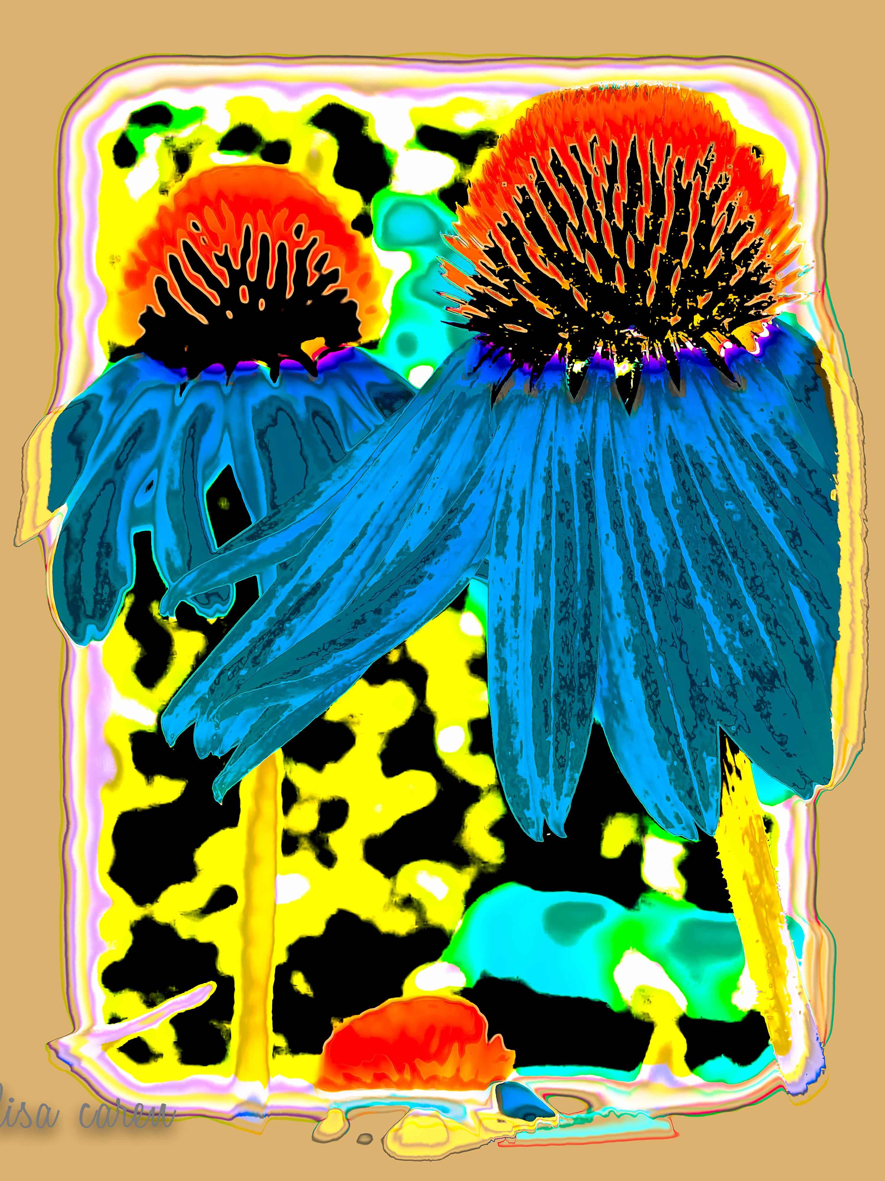 Echinacea Purpurea_.jpg