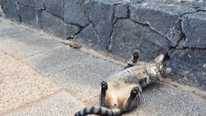 Lanzarote for cat lovers - Freddy's Cathouse