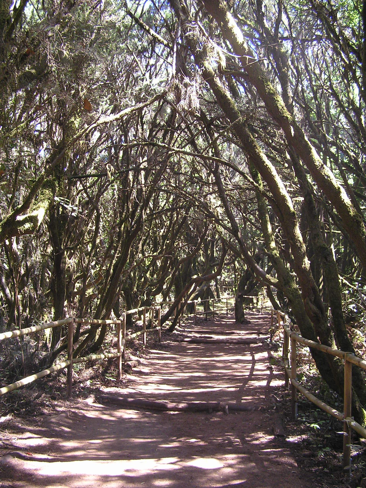 Laurisilva rain forest, La Gomera